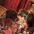 Kiss At Christmas by Kimberly Petts