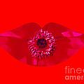 Kiss My Poppy by Clara Darlene Reger