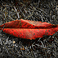 Kiss Of Leaf by Wayne Sherriff