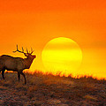 Kiss The Sun by Kadek Susanto