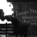Kissing Horses Joe Kidd Set Old Tucson Arizona 1972 by David Lee Guss