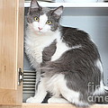 Kitchen Cubbard Cat by Michelle Powell