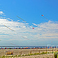Kites Flying Over The Sand by Tom Gari Gallery-Three-Photography