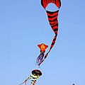Kites Over Baja California by Christine Till