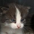Kitten by Bruce Lennon