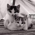 Kitten Cuddles by Mika Kurosaki