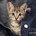 Kitten In Jean Jacket by Jean-Michel Labat