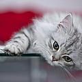 Kitten by Melanie Viola