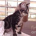 Kitten On Alert by Jussta Jussta