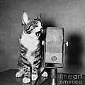 Kitten On The Radio by Syd Greenberg