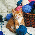 Kitten Playing With Yarn by David N Davis