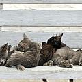 Kittens In Hydra Island by George Atsametakis