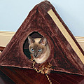Kitty A-frame by Sally Weigand