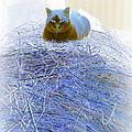 Kitty Blue IIi by Kathy Sampson