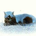 Kitty Blue IIII by Kathy Sampson