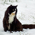 Kitty Cat In The Snow by Duane McCullough