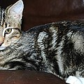 Kitty by Cheryl Fecht