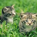 Kitty In Grass by Alex Grichenko