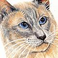 Kitty Kat Iphone Cases Smart Phones Cells And Mobile Cases Carole Spandau Cbs Art 346 by Carole Spandau