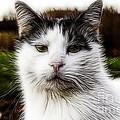 Kitty Kat by Jim Lepard