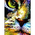 Kitty Nosed by Alice Gipson