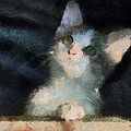 Kitty Photo Art 05 by Thomas Woolworth