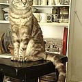 Kitty Prez Puzzeled by Suzanne Cerny