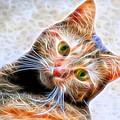 Kitty Strange by Alice Gipson