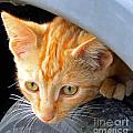 Kitty Under The Hood by Tina M Wenger