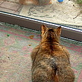 Kitty Watches The Squirrel by Susan Wyman
