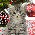 Kitty Xmas Present by MGL Meiklejohn Graphics Licensing