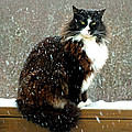 Kittycat In The Snow On The Fence by Duane McCullough