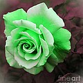 Kiwi Lime Rose by Barbara Griffin