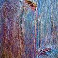 Knotty Plank #2b by Robert ONeil