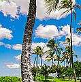 Ko Olina Leaning Palm 3 To 1 Aspect Ratio by Aloha Art