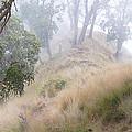 Misty Koa Ridge  by Kevin Smith