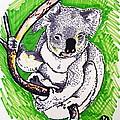 Koala by Andrea Keating