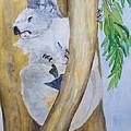 Koala Still Life by Patricia Beebe