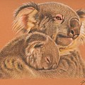 Koalas by Genevieve Desy