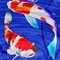 Kohaku Koi In Deep Blue Pool by Elaine Plesser
