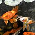 Koi Fish by Judie White