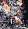 Koi In The Rain by Ted Head