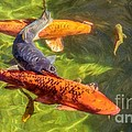 Koi by Peggy Hughes