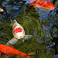 Koi Pond by Christiane Schulze Art And Photography