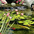 Koi Pond by Doug Kreuger