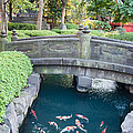 Koi Pond In Senso-ji Temple Grounds by Jill Mitchell