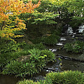 Kokoen Garden Waterfall - Himeji Japan by Daniel Hagerman