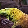 Komodo Dragon by Susan Tinsley