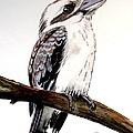 Kookaburra 5 by Anne Gardner