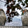 Kookaburra's On Guard At The Buffalo Zoo by Michael Frank Jr
